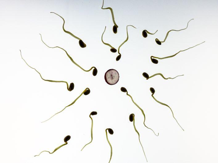 Kekacauan Sperma di Kolam Renang